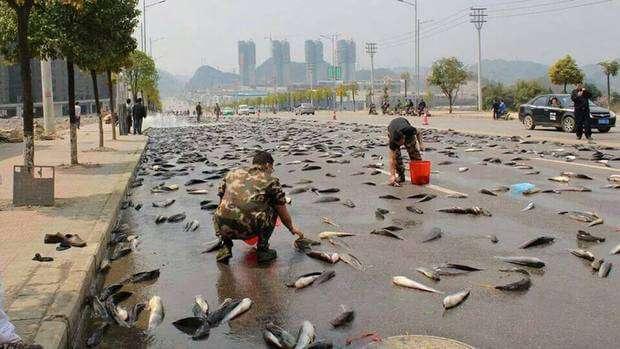 deszcz-ryb-Meksyk.jpg