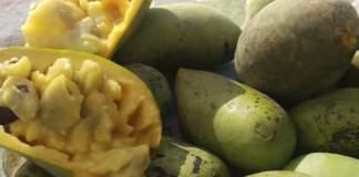 owoc-pawpaw.jpg