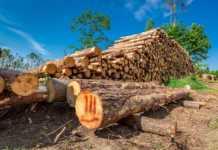 wylesianie-holandii.jpg
