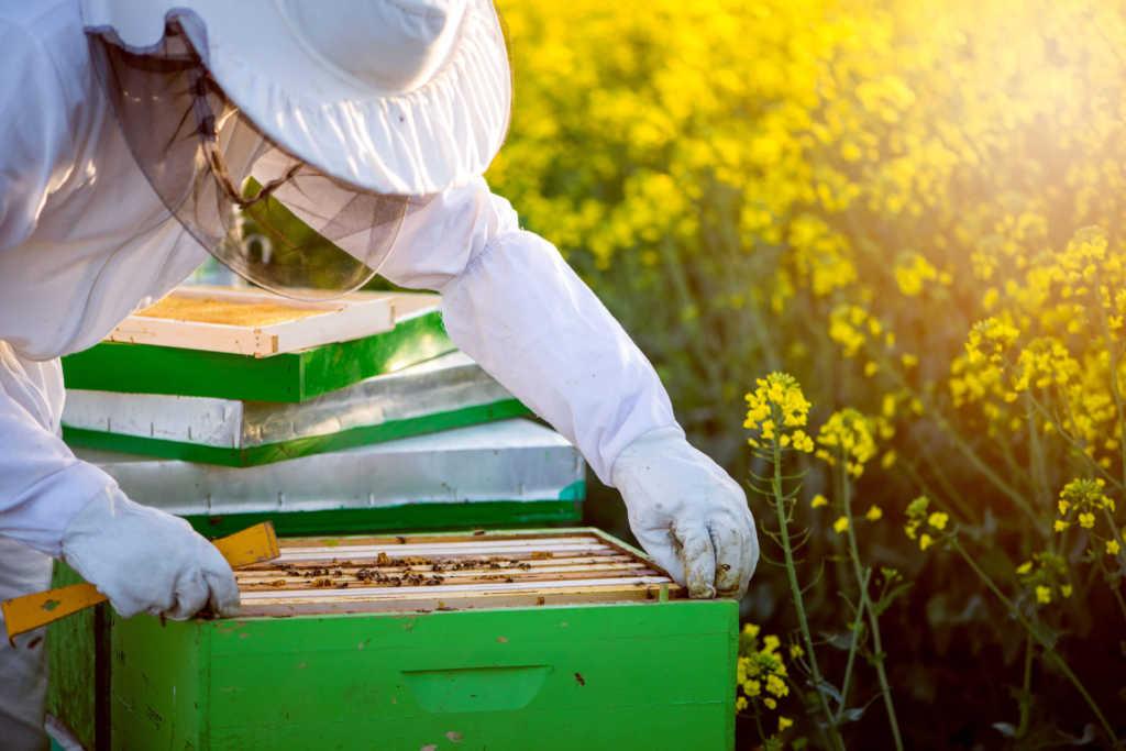 pszczoły-pasieka.jpg