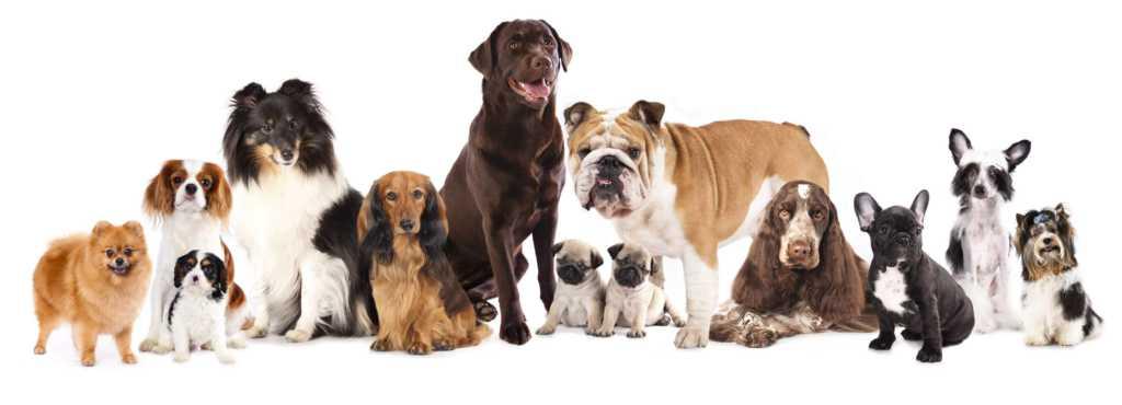 rasy-psów.jpg