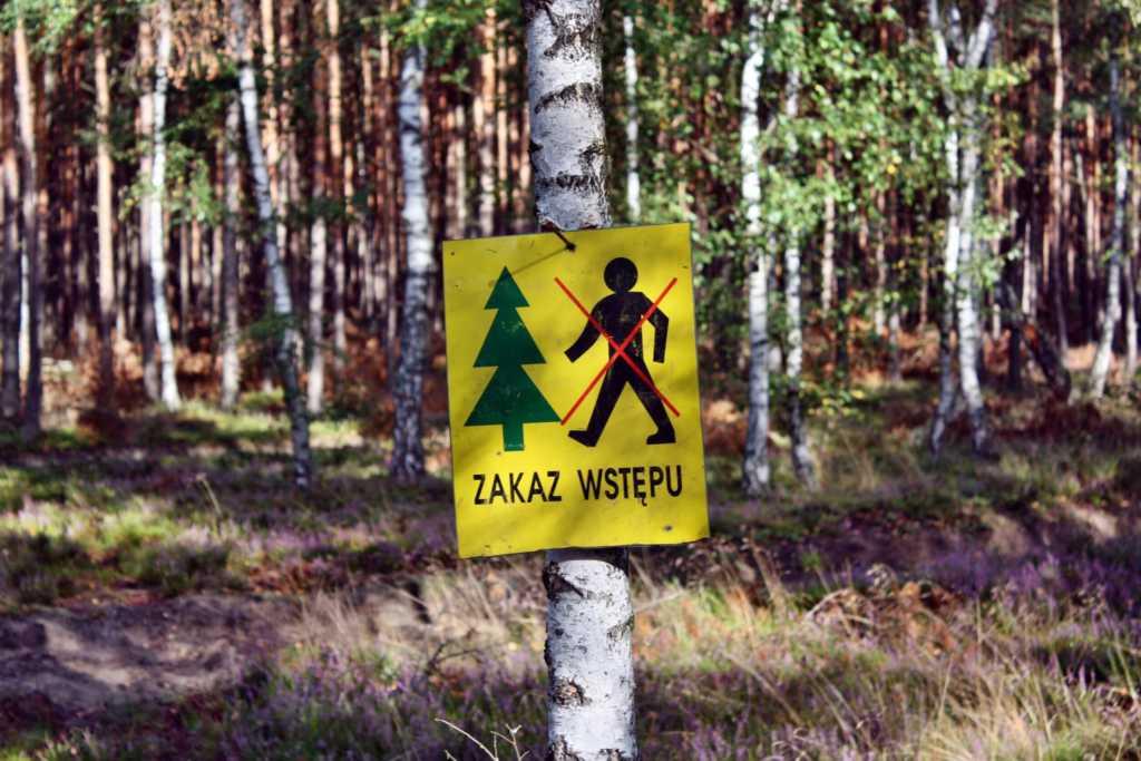 zakaz-wylesiania.jpg