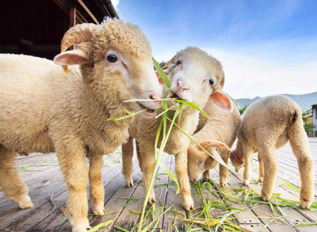 pasza-trawa-zwierzęta.jpg