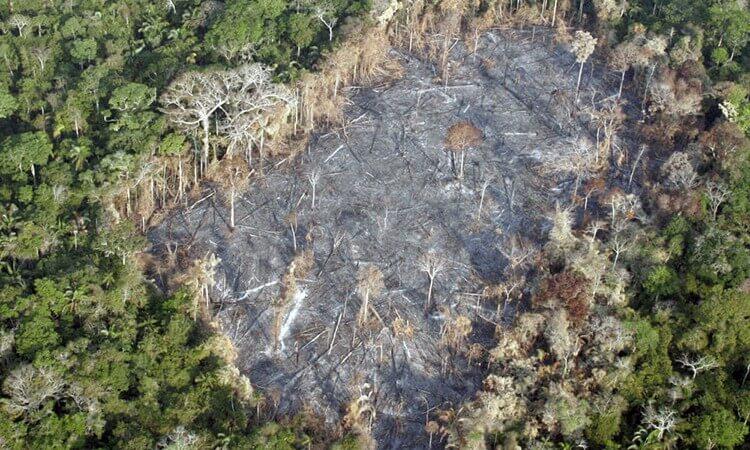 norwegia-zakaz-wylesiania.jpg