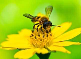 francja-ratowanie-pszczół.jpg