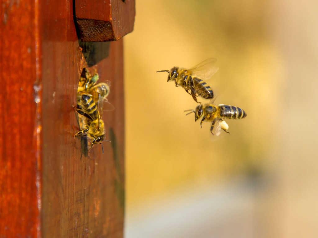 pszczoły.jpg