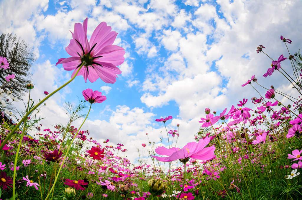 ogrody-dla-pszczół.jpg