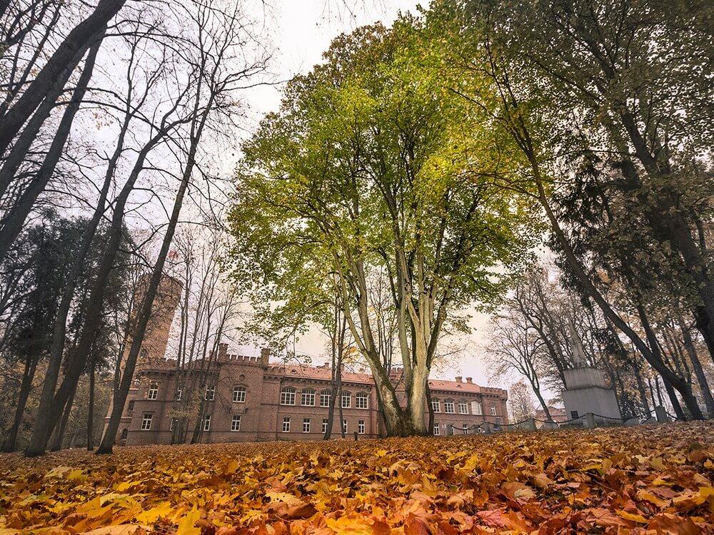 lipa-Litwa.jpg
