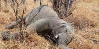 polowanie-na-słonie.jpg