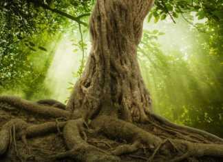 15-europejskich-drzew.jpg