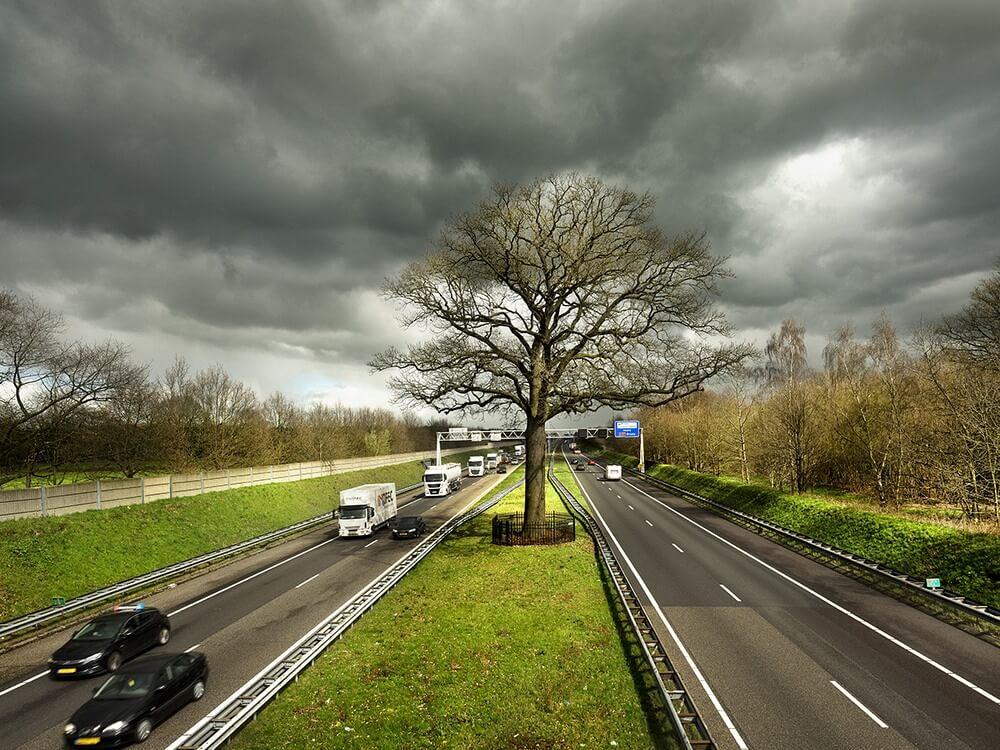dąb-autostrada.jpg