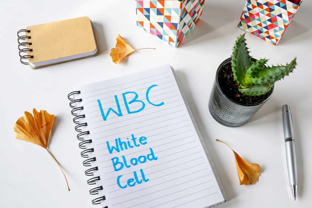 białe-krwinki.jpg