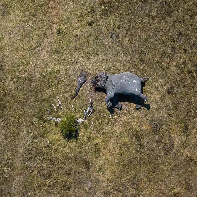 słonie-kłusownictwo.jpg