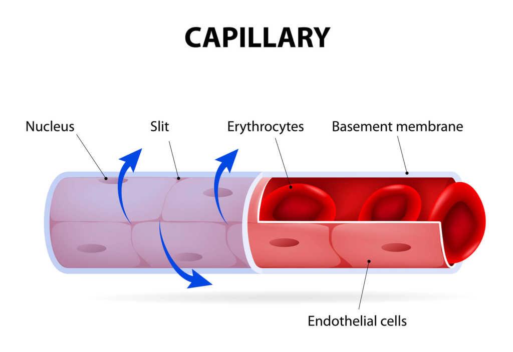 kapilary-serce-peryferyjne.jpg