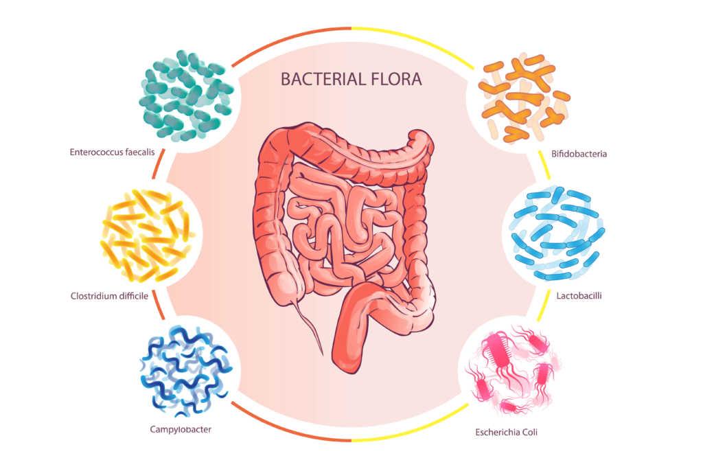 flora-bakteryjna-jelit.jpg