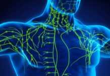 układ-limfatyczny-detoks.jpg