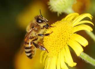 bank-genów-pszczół.jpg