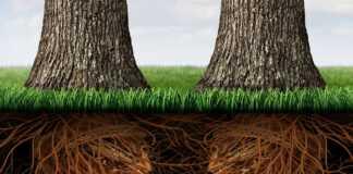 komunikacja-drzew.jpg