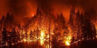 pożary-w amazonii.jpg