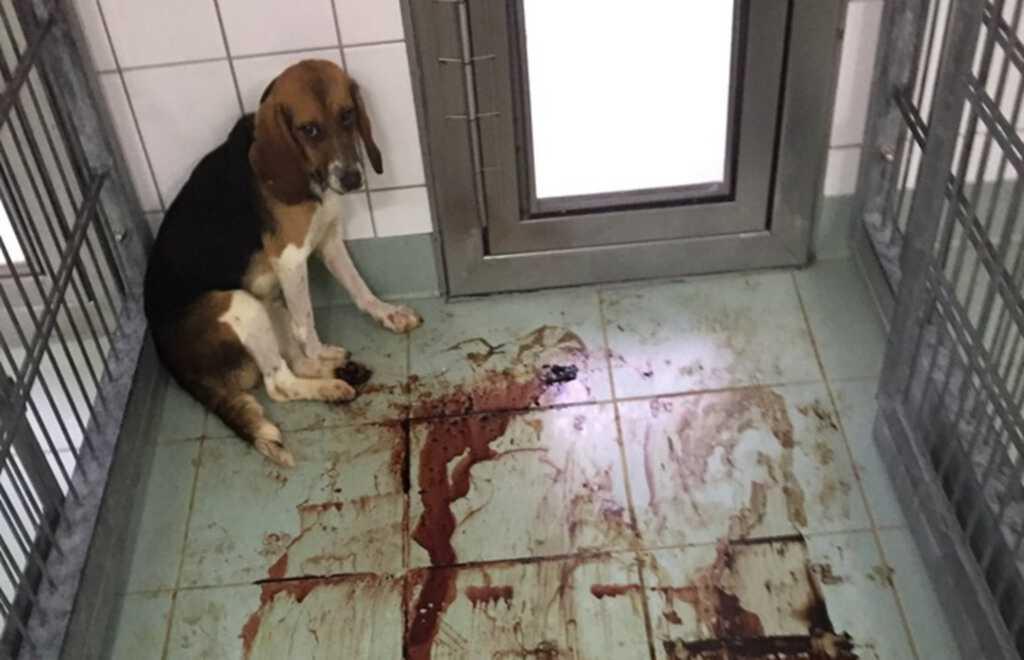 beagle-tortury.jpg