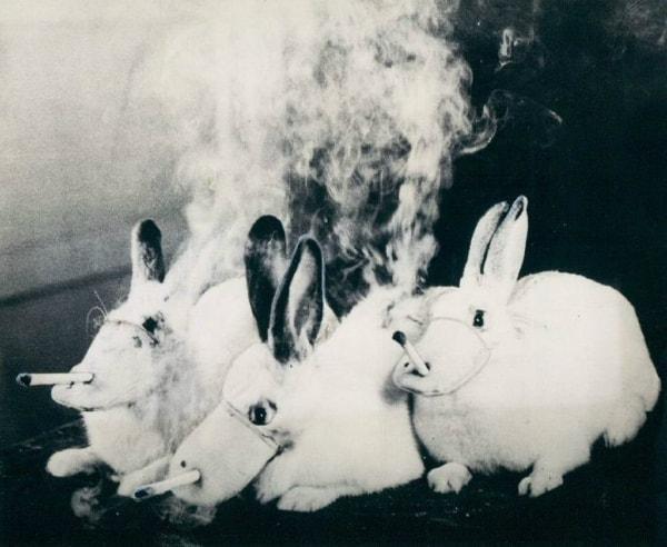 eksperymenty-zwierzęta.jpg
