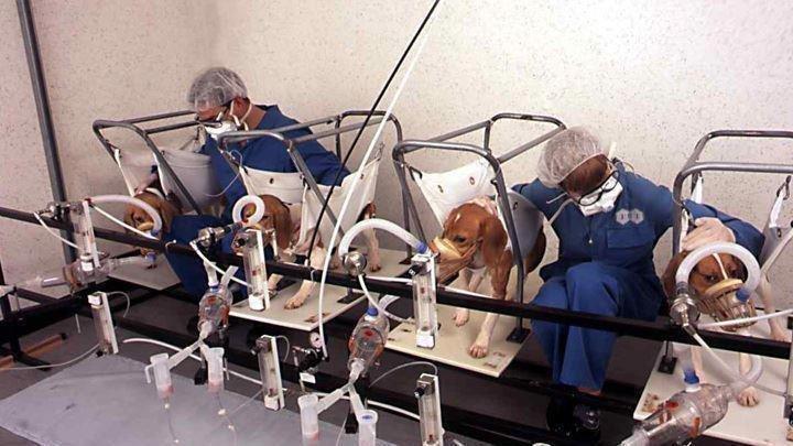 beagle-tytoń-eksperyment.jpg