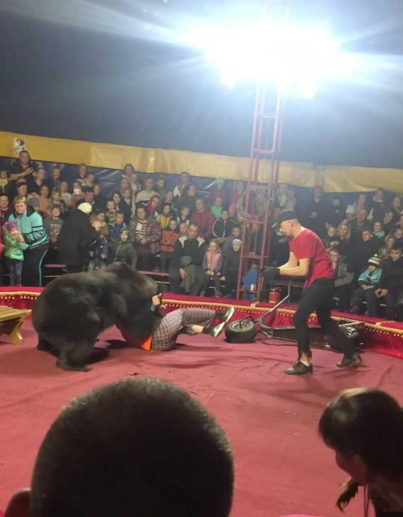 niedźwiedź-cyrk-atak.jpg