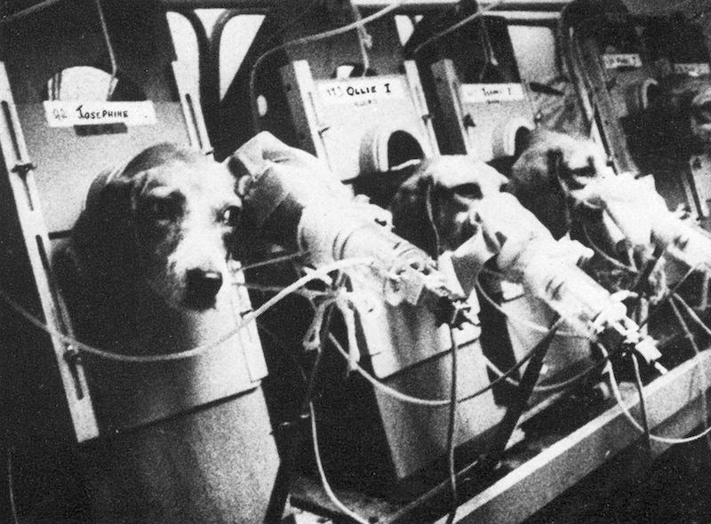 beagle-eksperyment.jpg