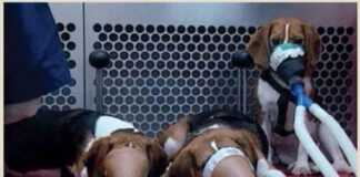 producenci-papierosów-psy.jpg