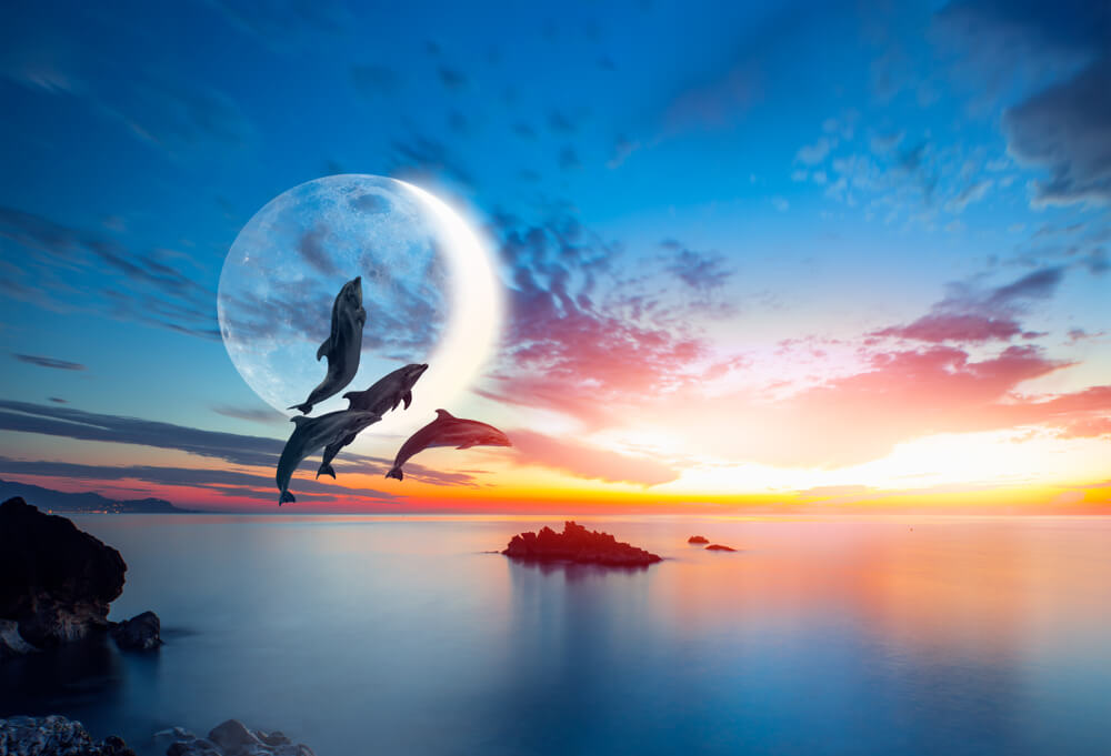 delfiny.jpg