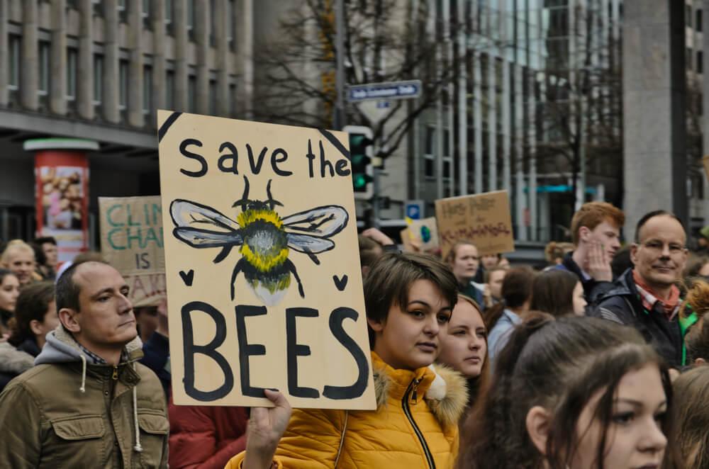 protest-pszczoły.jpg