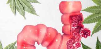 marihuana-medyczna-rak-jelit.jpg