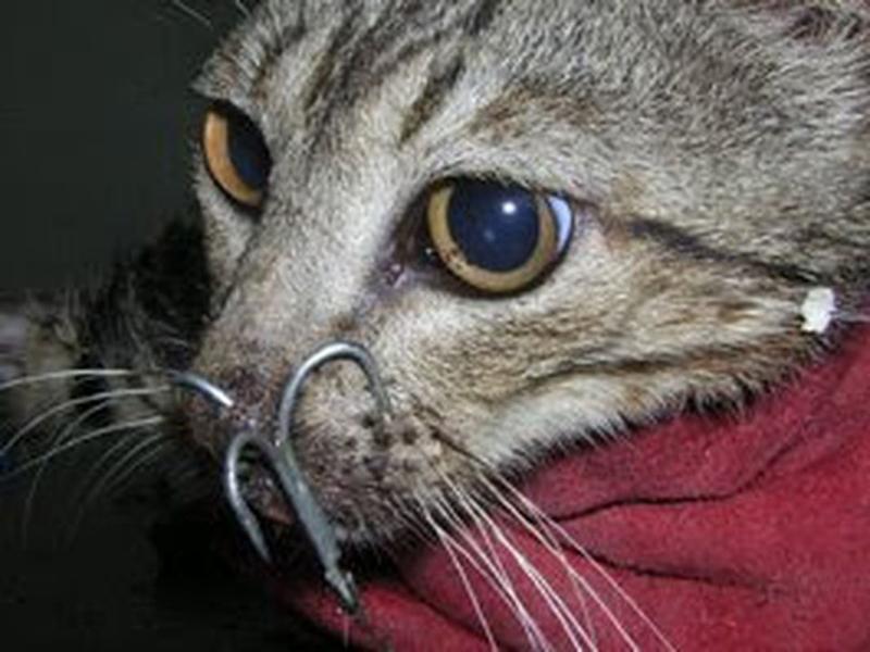 kot-przynętą.jpg
