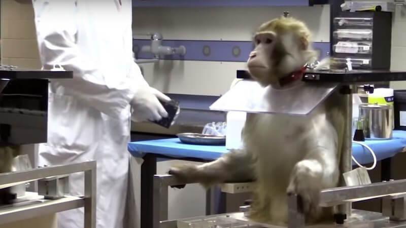 eksperyment-makaki.jpg