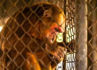 uratuj-makaki.jpg