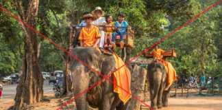 kambodża-słonie.jpg