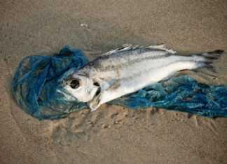 ryby-zatoka-pucka.jpg