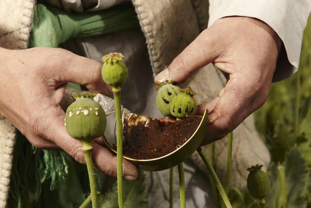 opium-afganistan.jpg