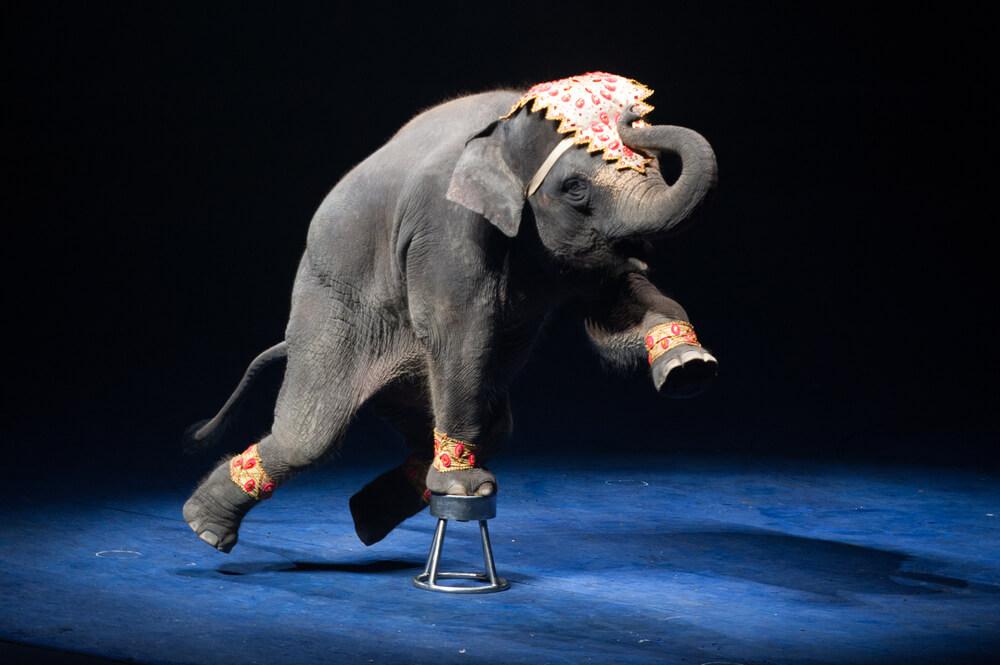 słonie-cyrk.jpg