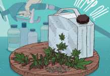 lotos-biopaliwa-konopne.jpg