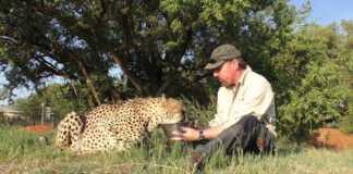 przyjaźń-człowika-z-gepardem.jpg