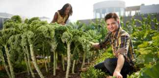 ekologiczny-ogród-na-dachu.jpg