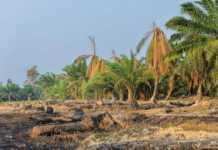 peru-zakazuje-wylesiania.jpg