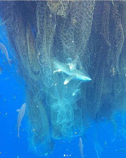 rekin-sieć.jpg