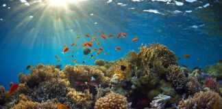 podwodne-głośniki-rafy.jpg