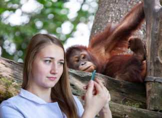 koronawirus-małpy.jpg