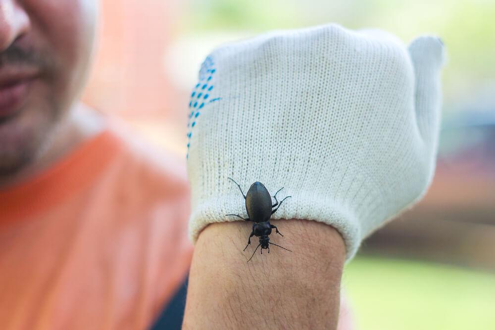 terapia-ekspozycji-owady.jpg