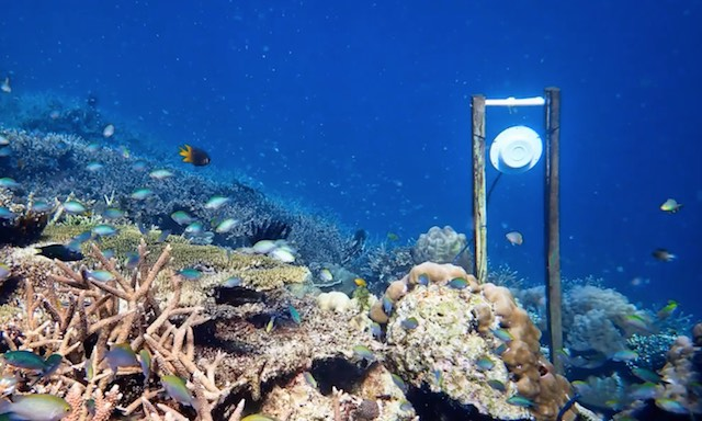 rafa-koralowa.jpg