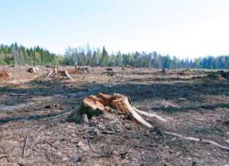 lasy-państwowe-szczecin.jpg