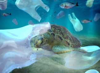 żółwie-morskie-plastik.jpg